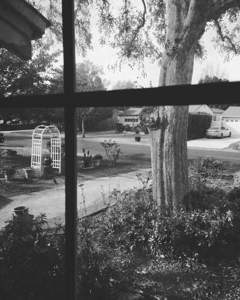 My Los Angeles 7 – The Front Garden and Neighborhood via Instagram