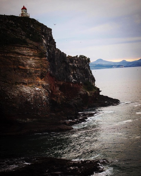 Taiaroa Head, Dunedin, New Zealand via Instagram