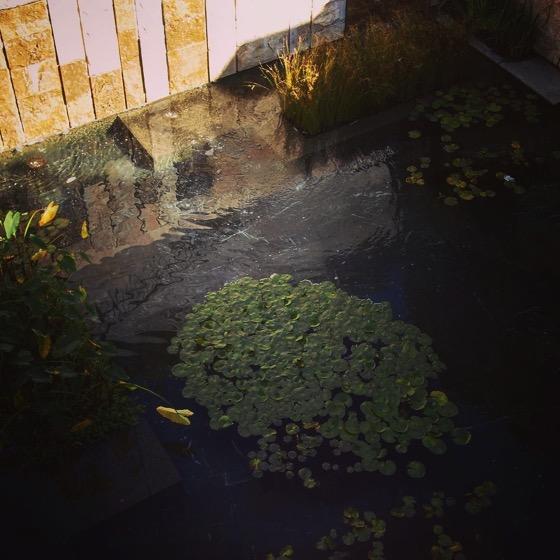 Lily pad pond via Instagram