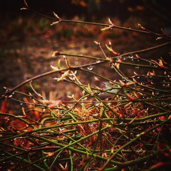 Raindrops, Dunedin Botanic Garden, Dunedin, New Zealand via Instagram