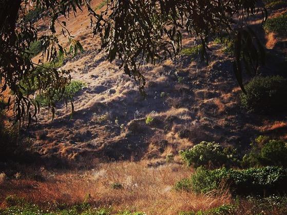 A Scene from Santa Cruz Island via Instagram