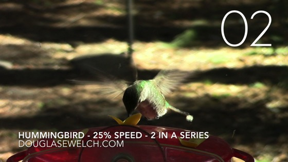 Hummingbirds at the feeder - 25% Speed - 2 in a series [Video]