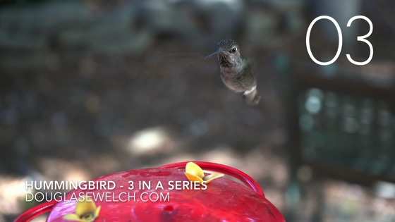 Hummingbirds at the feeder in 4k - 3 in a series [Video] (0:57)