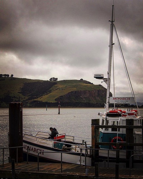 The Monarch, Otago Harbor, Dunedin, New Zealand via My Instagram