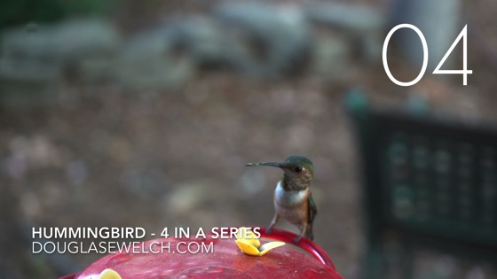 Hummingbirds at the feeder in 4k - 4 in a series [Video] (1:00)