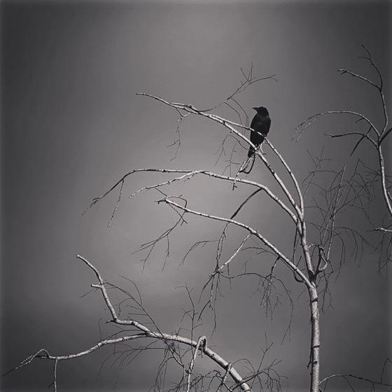 Lone Sentinelfrom My Instagram