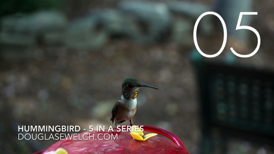 Hummingbirds at the feeder in 4k - 5 in a series [Video] (1:13)