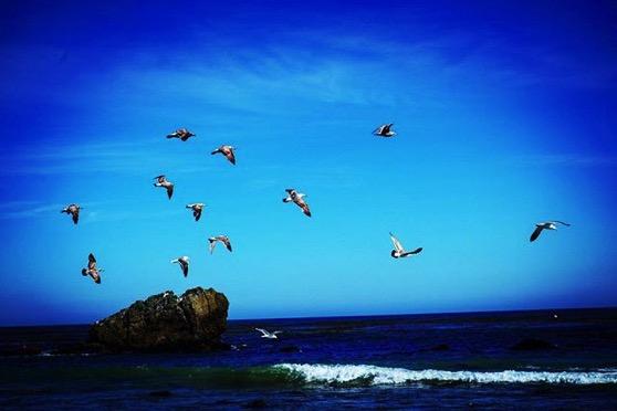 Gulls in Flight via My Instagram