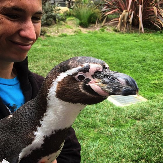 Penguin Encounter! via My Instagram
