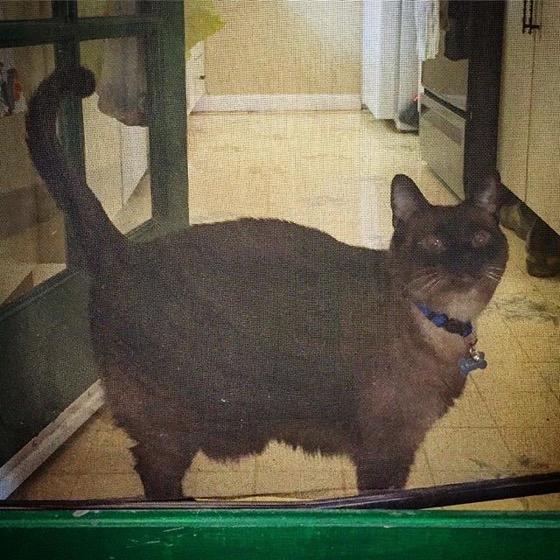 Kitty waiting at the door via Instagram