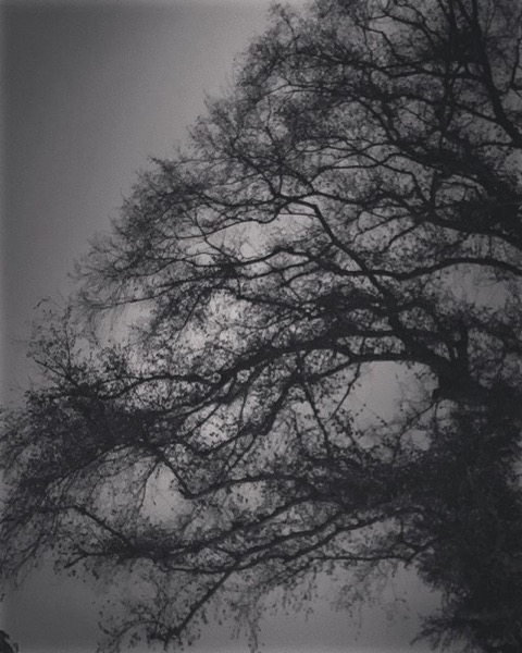 Elm tree at night via My Instagram