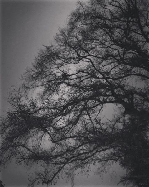 Elm tree at night via My Instagram