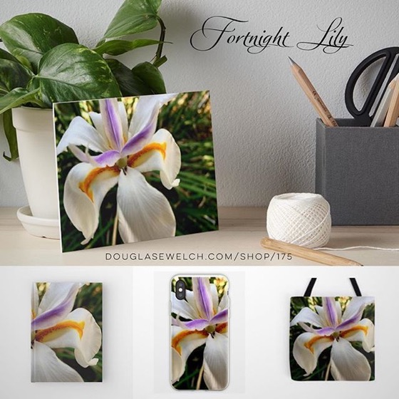 Bring these Fresh Fortnight Lilies Home With Art Boards, Totes, Journals, iPhone Cases and Much more!