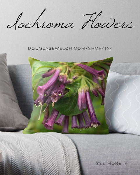 Experience A Day In The Garden with these Iochroma Flower Pillows, iPhone Cases, and Much More!