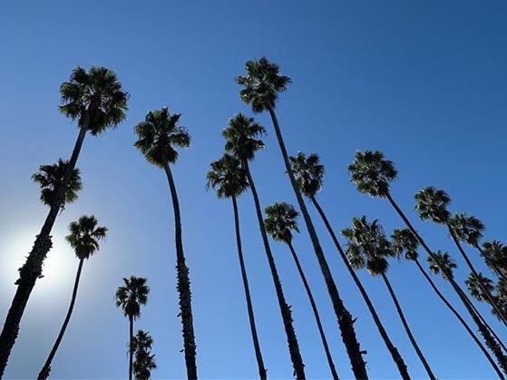 Santa Barbara palm trees via Instagram