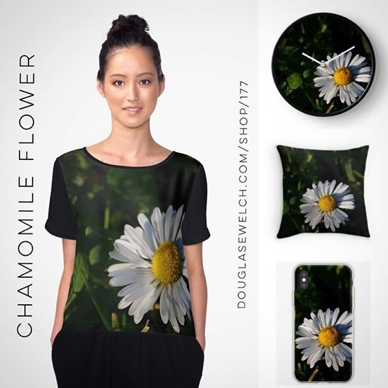 Sit Back and Relax With These Calming Chamomile Flower Tops, Pillows, iPhone Cases and Much more! [For Sale]