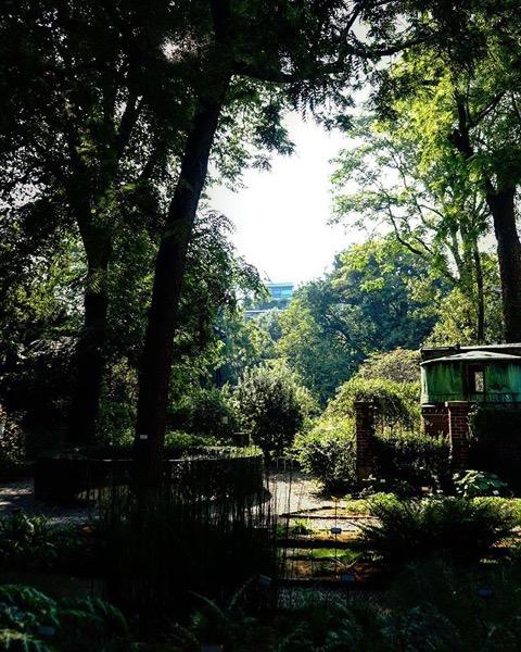 View in Orto Botanico di Brera, Milano, Italia via Instagram
