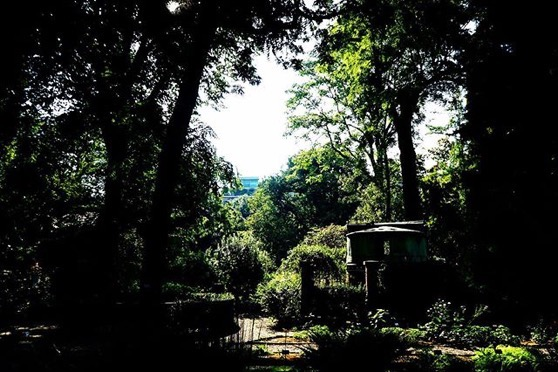 Another view of Orto Botanico di Brera, Milano, Italia via Instagram