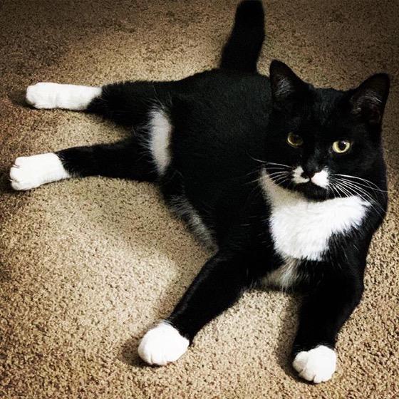 Rascal: My Mom and Sister's Kitty via Instagram