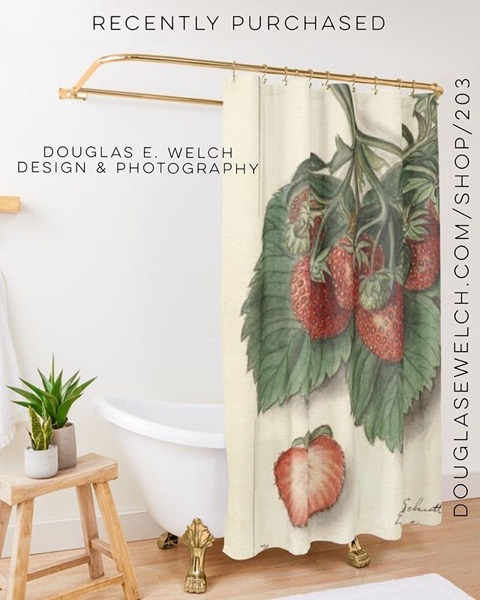 Recently Purchased — Vintage Strawberries Shower Curtain by Douglas E. Welch [For Sale]
