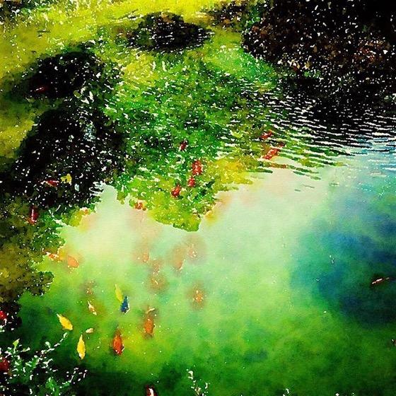 Fish Pond, Villa Reale di Monza, Italy via Instagram