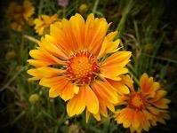 Shining Bright from A Gardener's Notebook