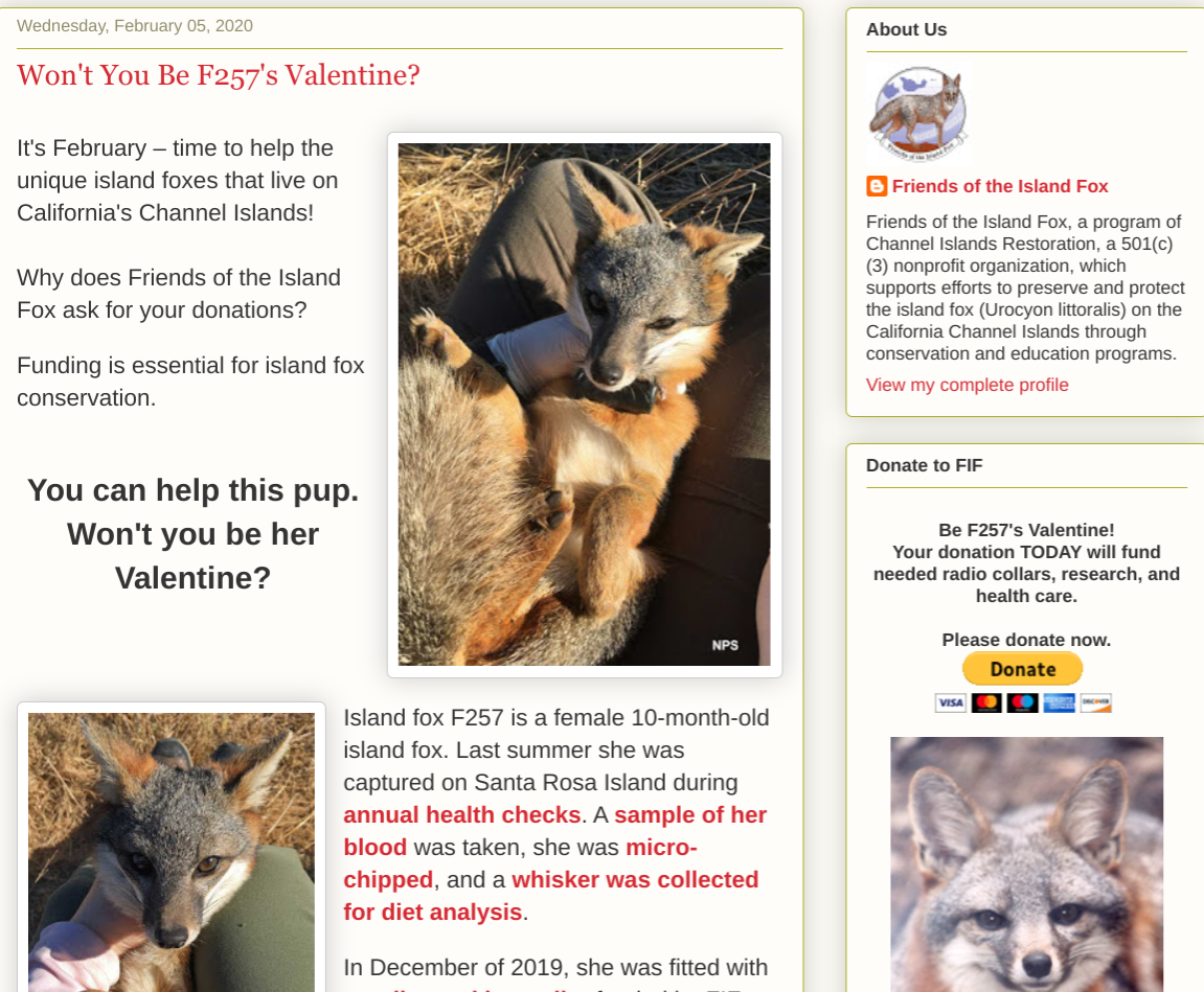 Please Consider A Valentine's Donation For The Channel Island Fox!