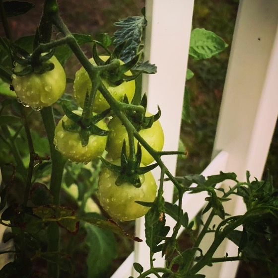 Green tomatoes via Instagram and TikTok