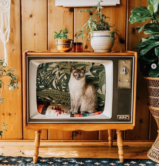 People Are Transforming Vintage TVs Into Cozy Beds for Their Feline Friends via My Modern Met