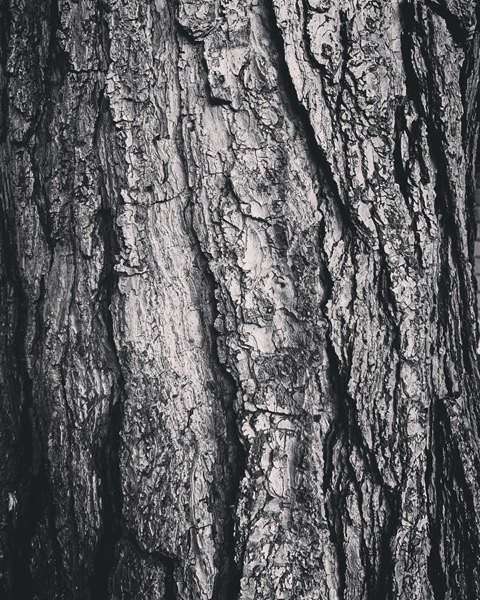 Pine Bark via Instagram