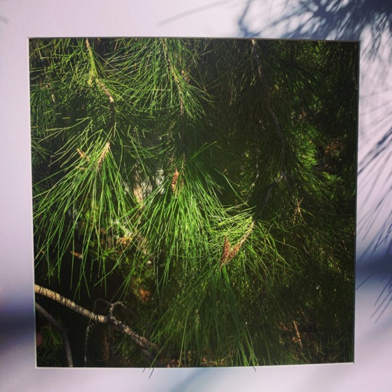 Black pine - One Square Foot - 13 in a series via Instagram