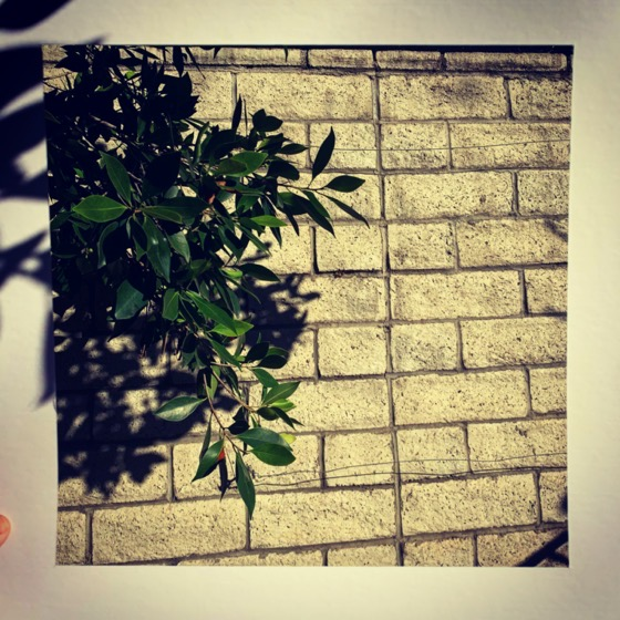 Ficus Leaves – One Square Foot – 7 in a series via Instagram