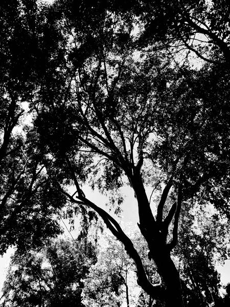 Above the garden via Instagram