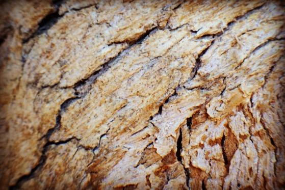 Eucalyptus Bark Macro Abstract via Instagram