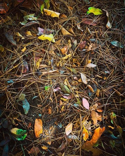 Woodland Floor via Instagram