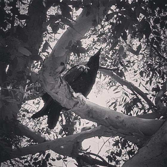 O' Raven, My Raven via Instagram