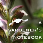 Audio: Your Garden - Inch-by-Inch from A Gardener's Notebook - Dog Days of Podcasting 2014 - 8/30