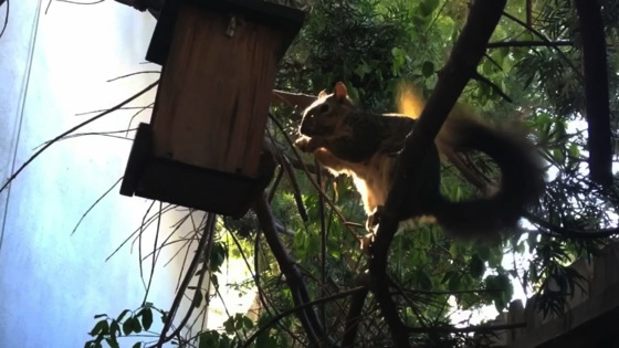 Video: A squirrel in the garden hyperlapse - Dog Days of Podcasting 2014 - 29/30