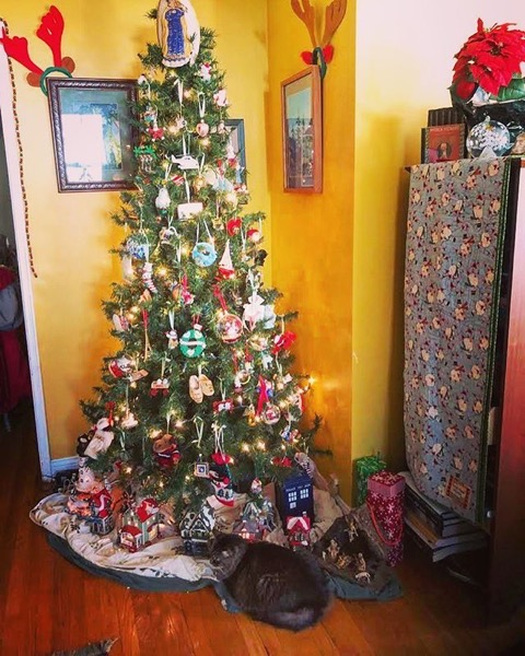 It's not a tree until there's a kitty sitting under it! via Instagram