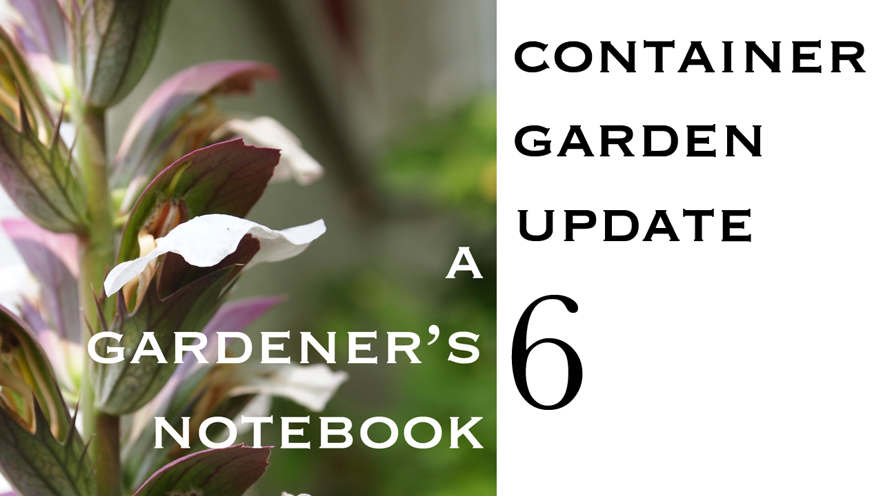 Container Garden Update 6 from A Gardener's Notebook