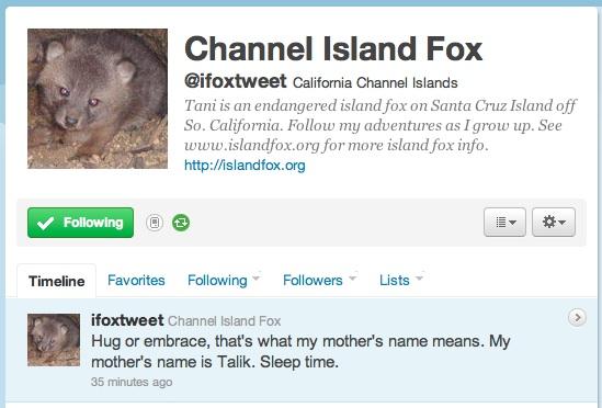 Follow the life of an newborn endangered Channel Island Fox on Twitter!