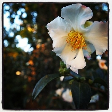 Photo: White Rose via Instagram