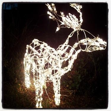 Photo: Christmas Deer via Instagram