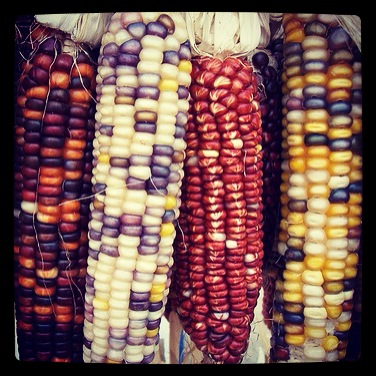 Photo: Colorful corn via #instagram