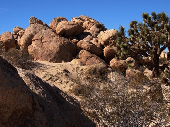 Photo: Out West #2 – Joshua Tree and Boulders at the Antelope Valley Indian Museum