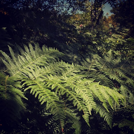 A Field of Ferns at The Old House on the Flanks of Etna via Instagram [Photo]