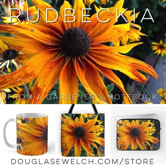 Rudbeckia – Buy your favorites now exclusively from Douglas E. Welch via Instagram [Photo]