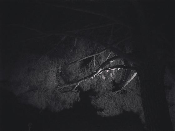 Night Pine via Instagram [Photo]