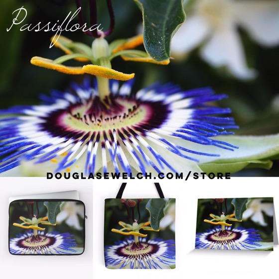Get these Passiflora products exclusively from Douglas E. Welch – Clothing, Cards, Smartphone Cases, Home decor and more!