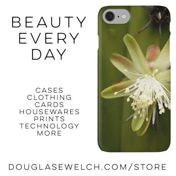 Buy this White Cactus Flower iPhone case and much more from Douglas E. Welch